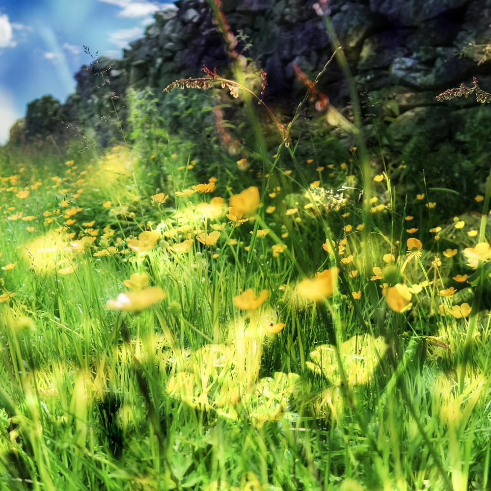 Winskill summer flowers