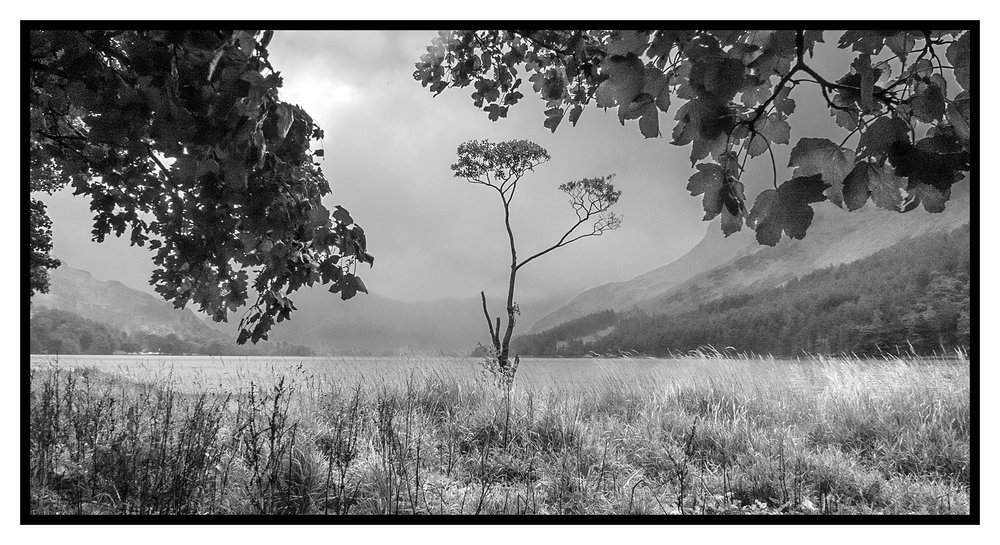 Lone Tree in the Rain