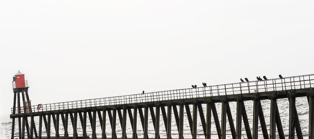 Resting Birds on East Pier