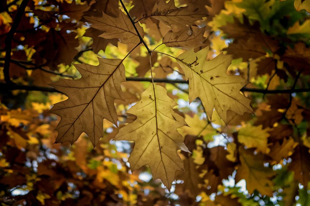 Hagg Wood leaves