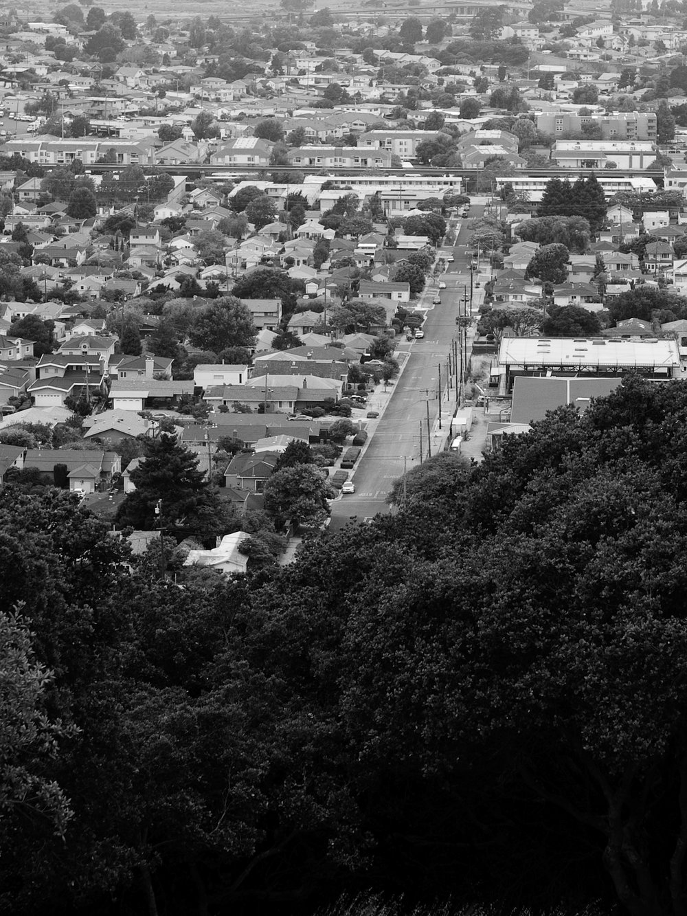 View of Donal Avenue from El Cerrito Hillside Natural Area