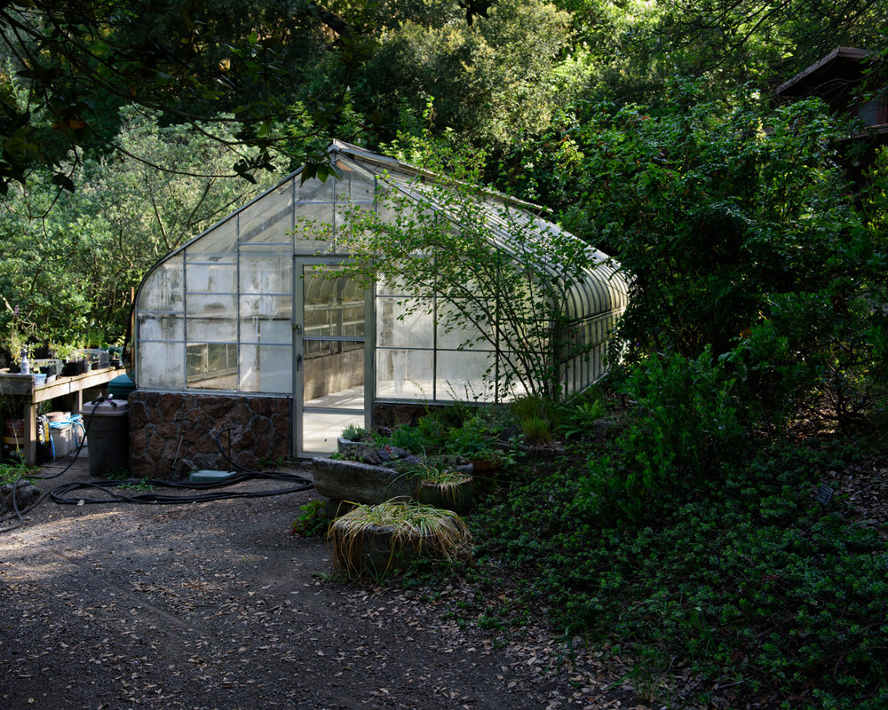 The Greenhouse where volunteers propagate native plant species at the Regional Parks Botanic Garden in Tilden Park.