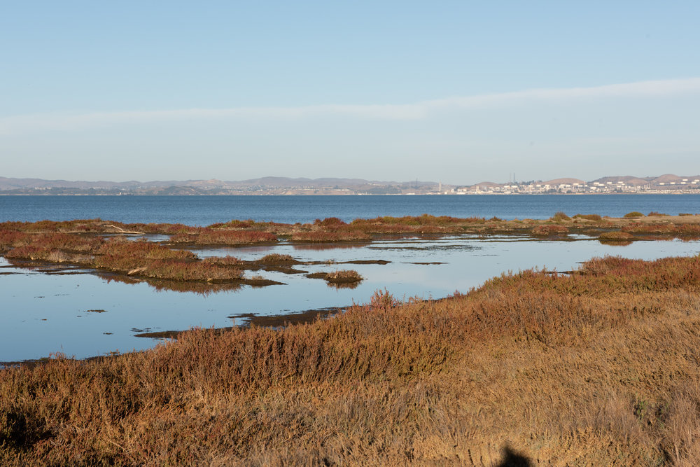 Point Pinole was selected by the Watershed Project as the site for their Oyster restoration project