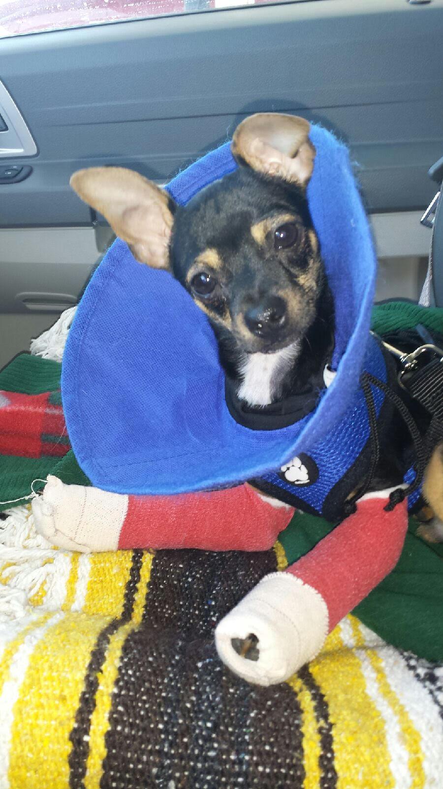 Fourth splint change. The cutest patient ever.