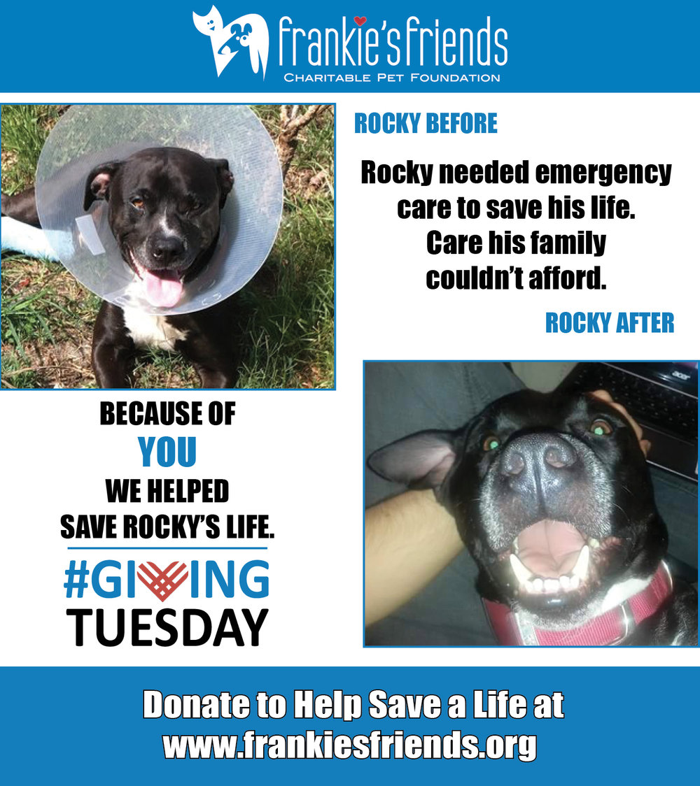 GIving Tuesday Rocky_2a.jpg
