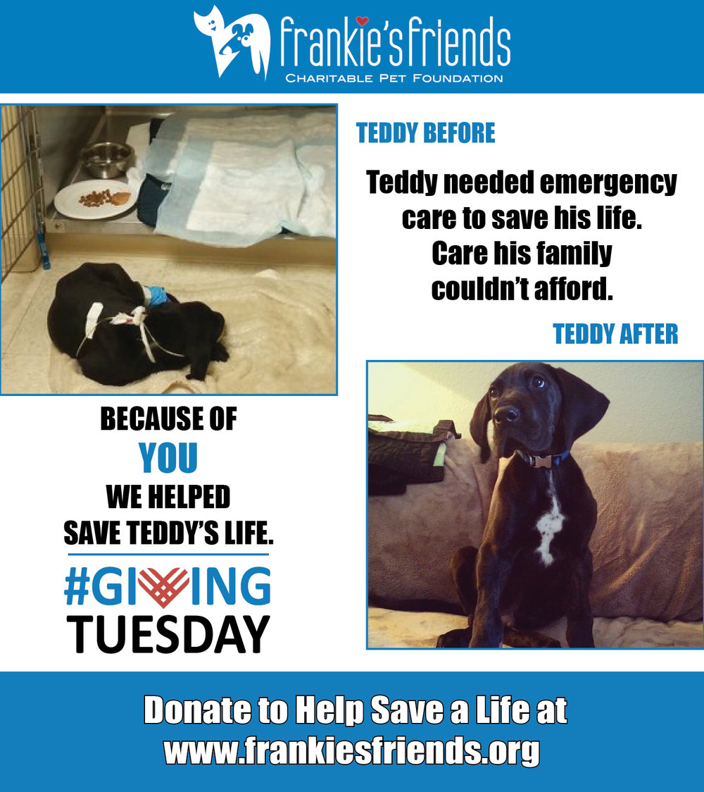 GIving Tuesday Teddy_2a.jpg