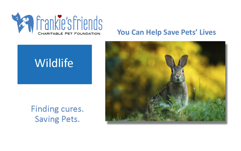 Wildlife Banner_Kindness.png