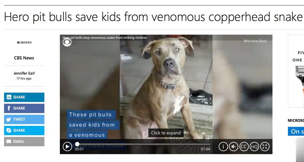 CBS News, Hero pit bull Slayer