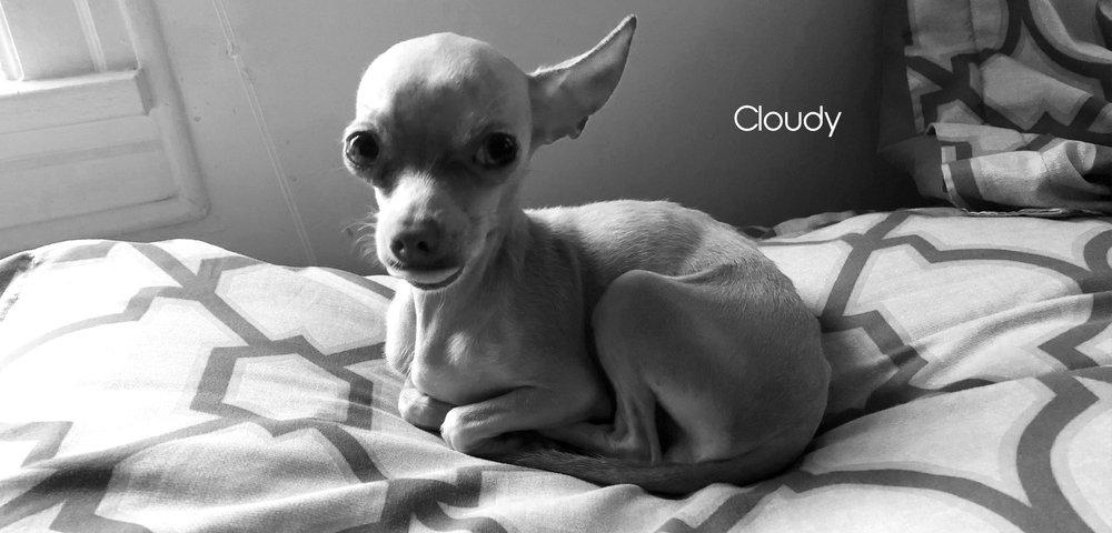 Cloudy FF slider images for website.jpg