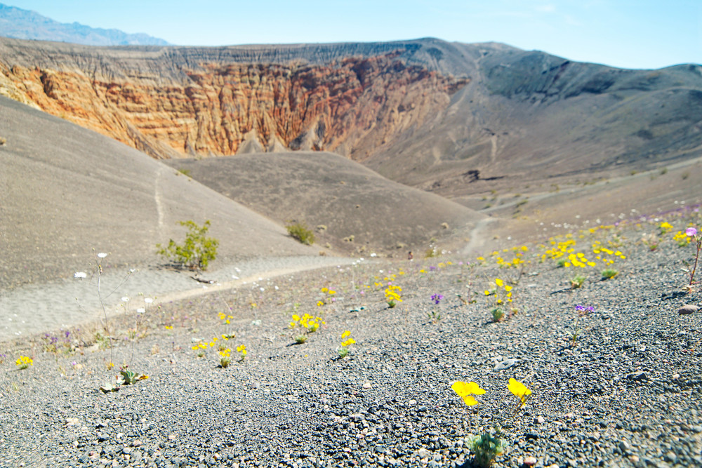 Superbloom along the Crater rim
