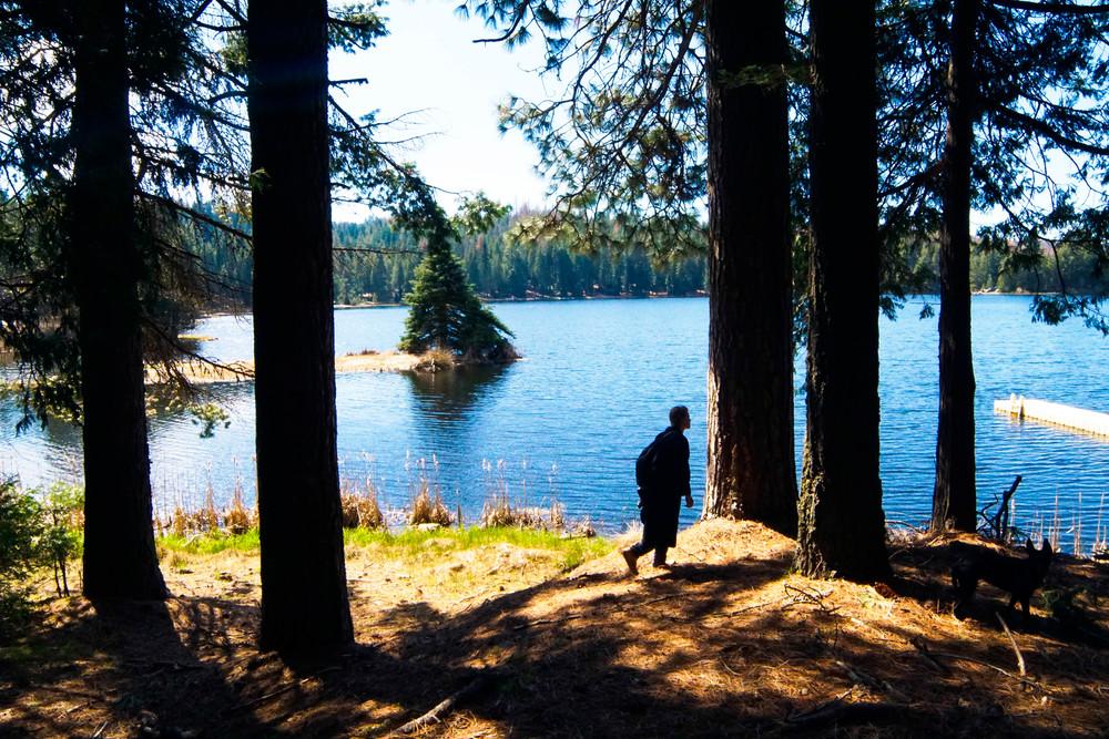 Sequoias & Silhouettes