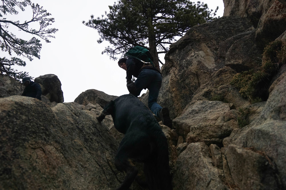 Without thumbs, climbing up Castle Rock proves to be a little harder for our furry friend. With a lil' push even Zero reached the pinnacle!