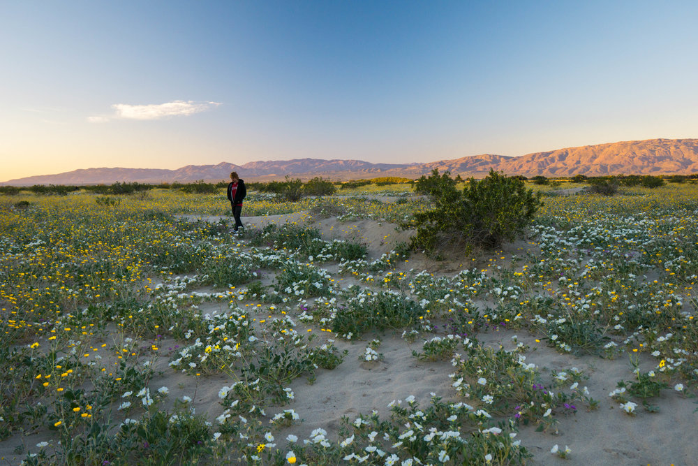 Knowing the historic bloom would draw hoards of eager explorers, we woke up 2 hours before sunrise to enjoy near solitude