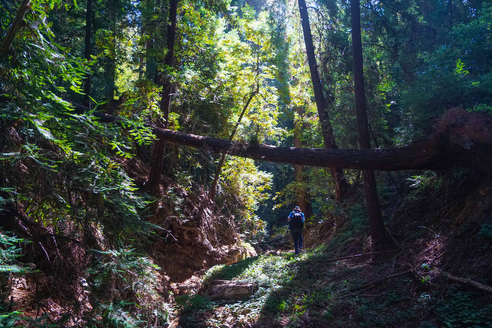 Big Sur has numerous well-known wonders, but some of the best adventures happen from a random turnout or seldom taken trail.