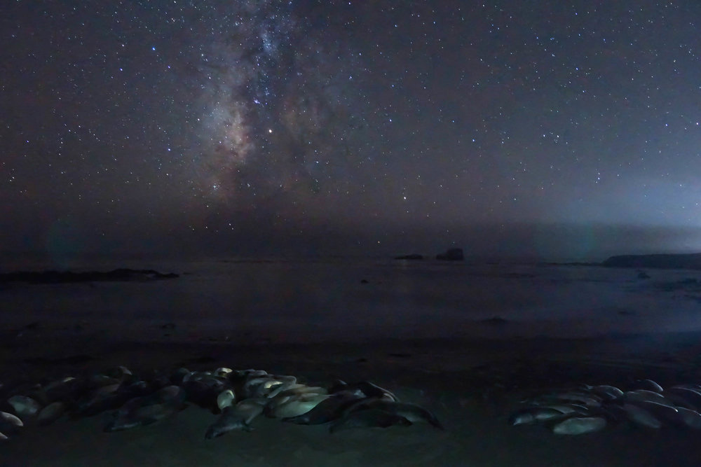 Elephant Seals sleep under the Milky Way along PCH in Central California as we head to meet an old friend, Dylan Gaylord, at McWay Falls