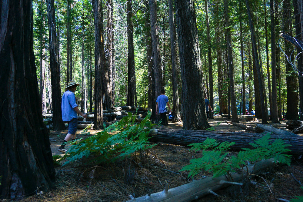 Rested & recovered we scurry off through emerald ferns & towering sequoias on our stroll to the river for a swim as the day quickly heats up.