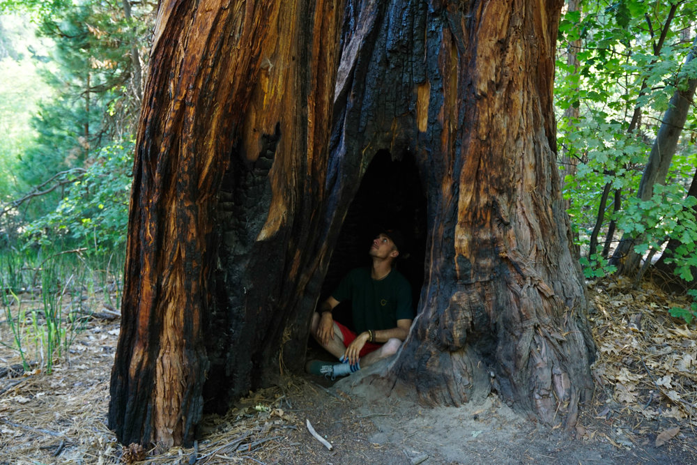 Well that's one way to escape the heat. Forest fires frequently sweep through these forests leaving behind burn scars & human-sized caverns, but the mighty Giant Sequoia is nearly impossible to kill.