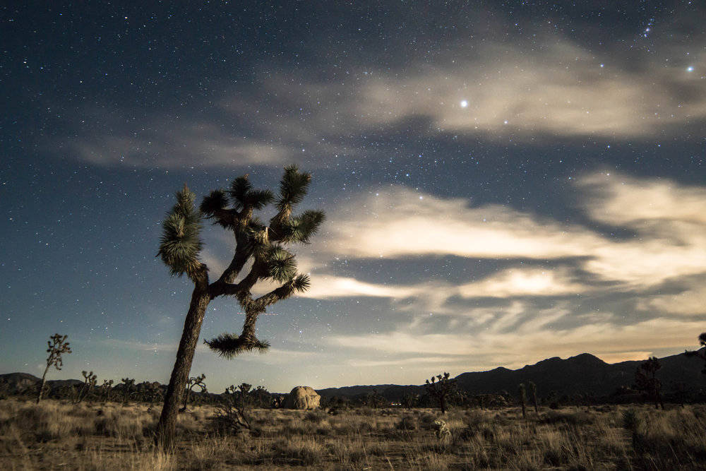 Arriving at camp in Joshua Tree after dark we set off on a night hike beneath a sea of stars.