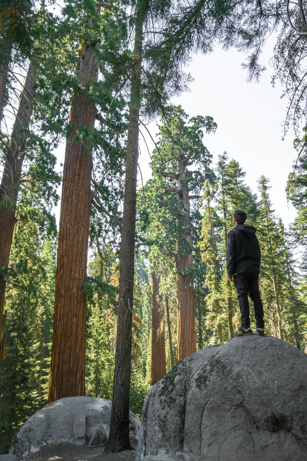 For a final short hike, we head to the towering 2,000 year old giant trees in Grant Grove.