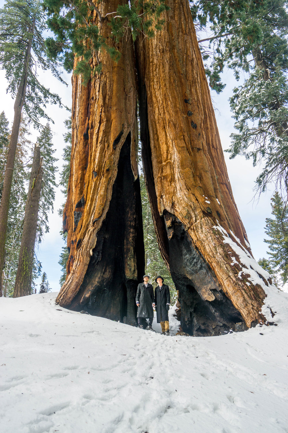 Example #1: Two monstrous side-by-side Sequoias sharing a massive fire scar. Even fire struggles to kill these trees. Almost like nothing happened, they keep growing.