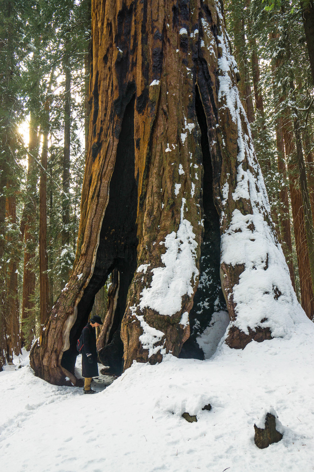 Another oddity appears when we discover a tree with an arch forged by fire.