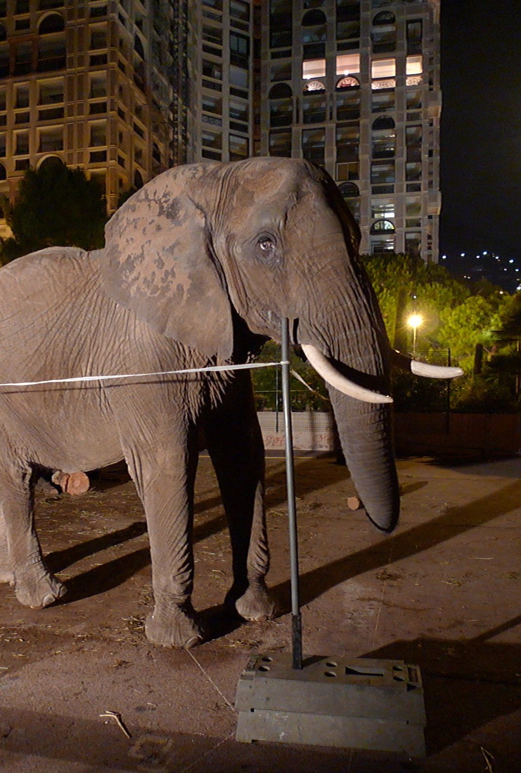 elephant in monte carlo