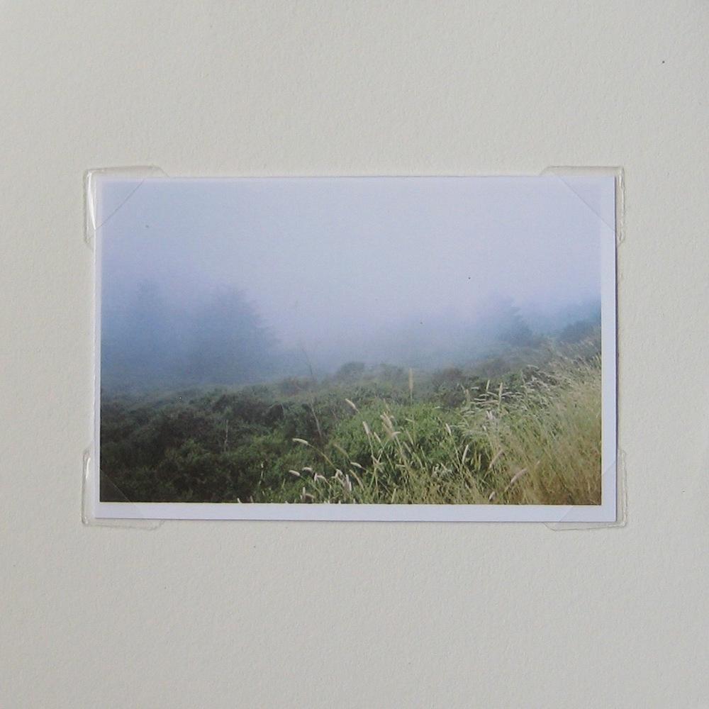 Ocean forest mist