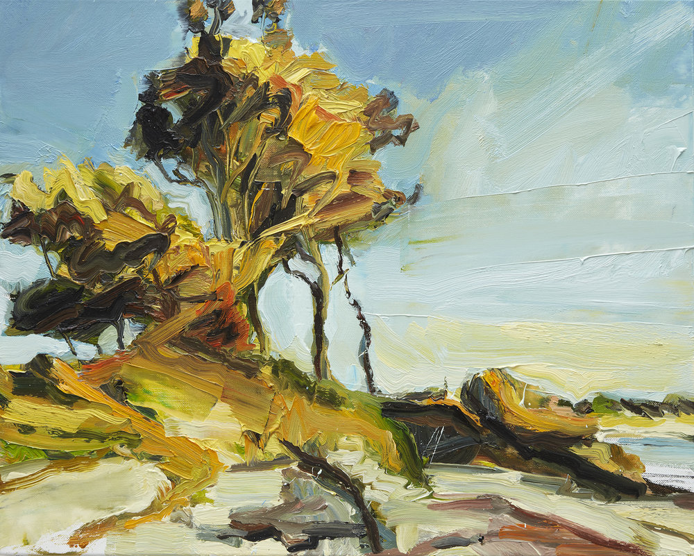 SOUTH COASTAL TREES 2018 oil on linen 61 x 76cm