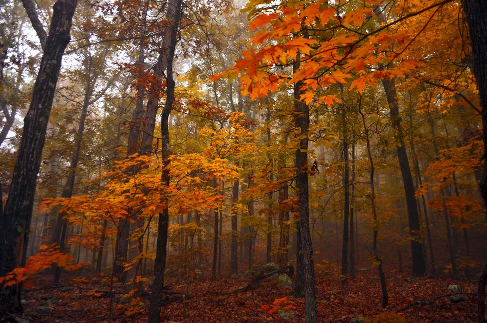 Fall Forest, Arkansas Autumn