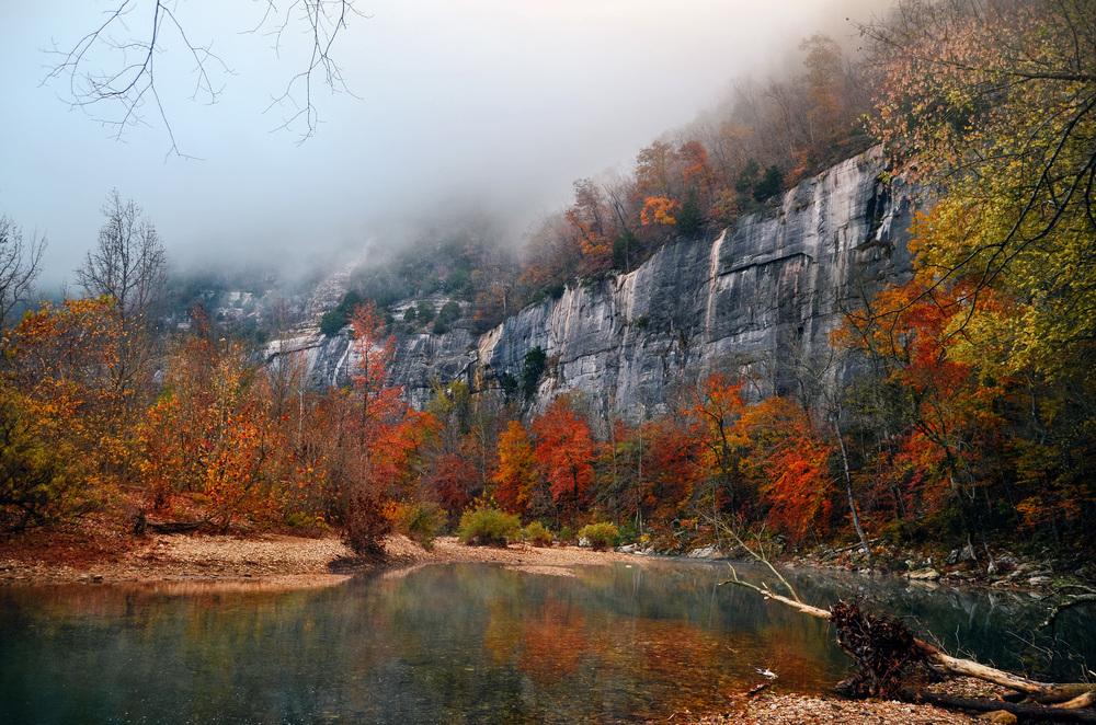 Steel creek trees color.jpg