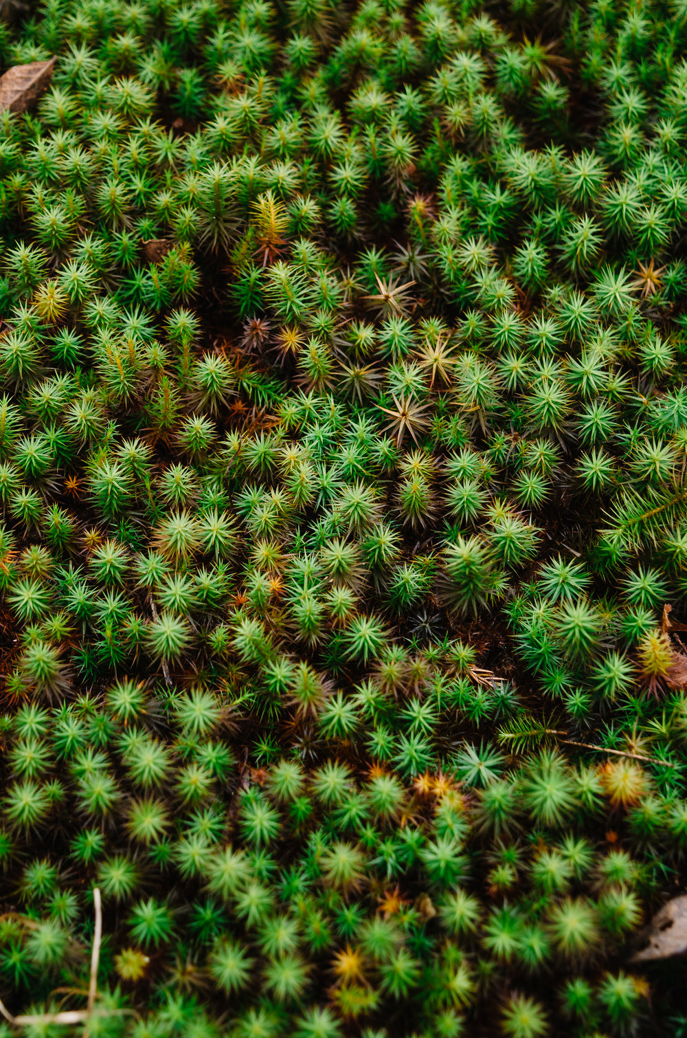 Star moss above Hide Out Hollow Falls.
