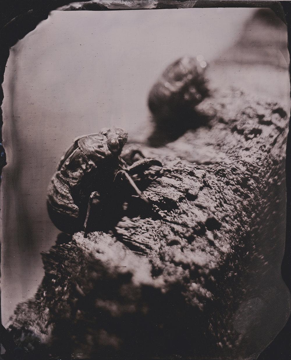Cicadas 1 smaller.jpg