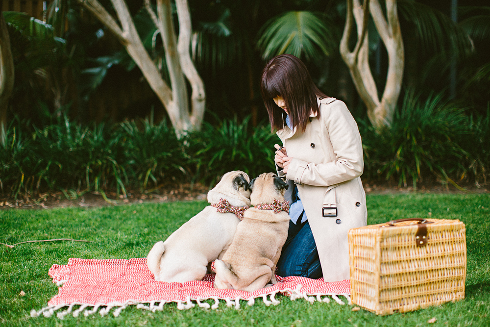 twoguineapigs_pet_photography_oh_jaffa_picnic_pugs_1500-1.jpg