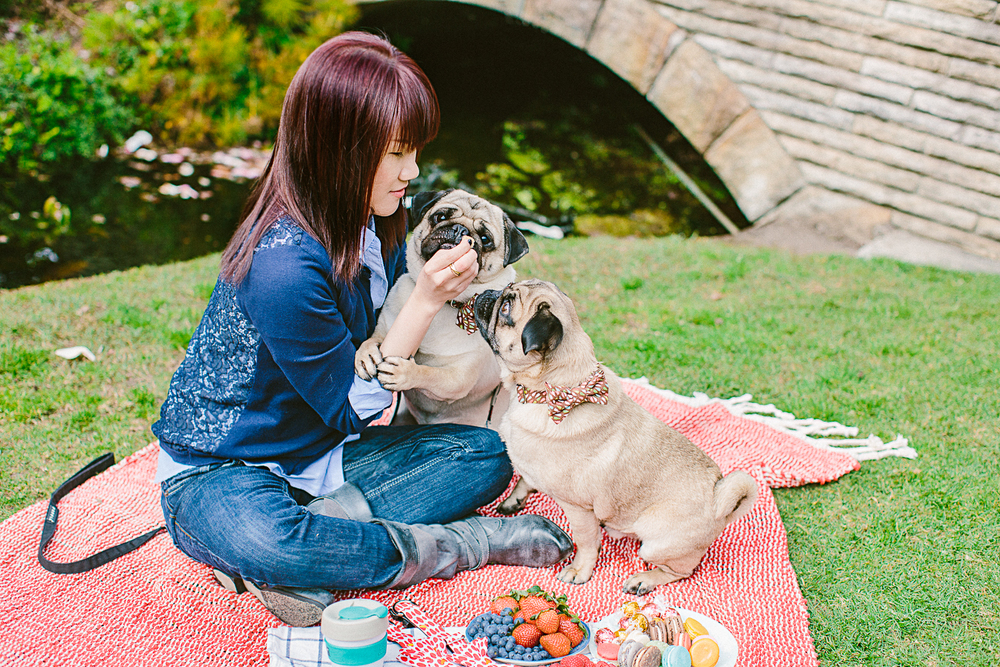 twoguineapigs_pet_photography_oh_jaffa_picnic_pugs_1500-16.jpg