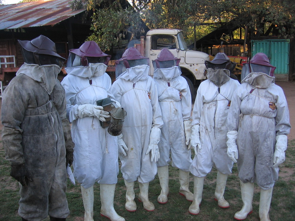 Apiculture - Putting what you have learnt into practice