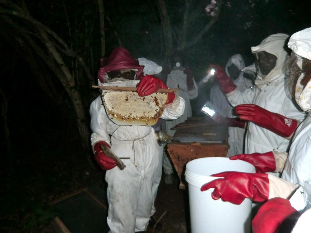 Apiculture - Honey