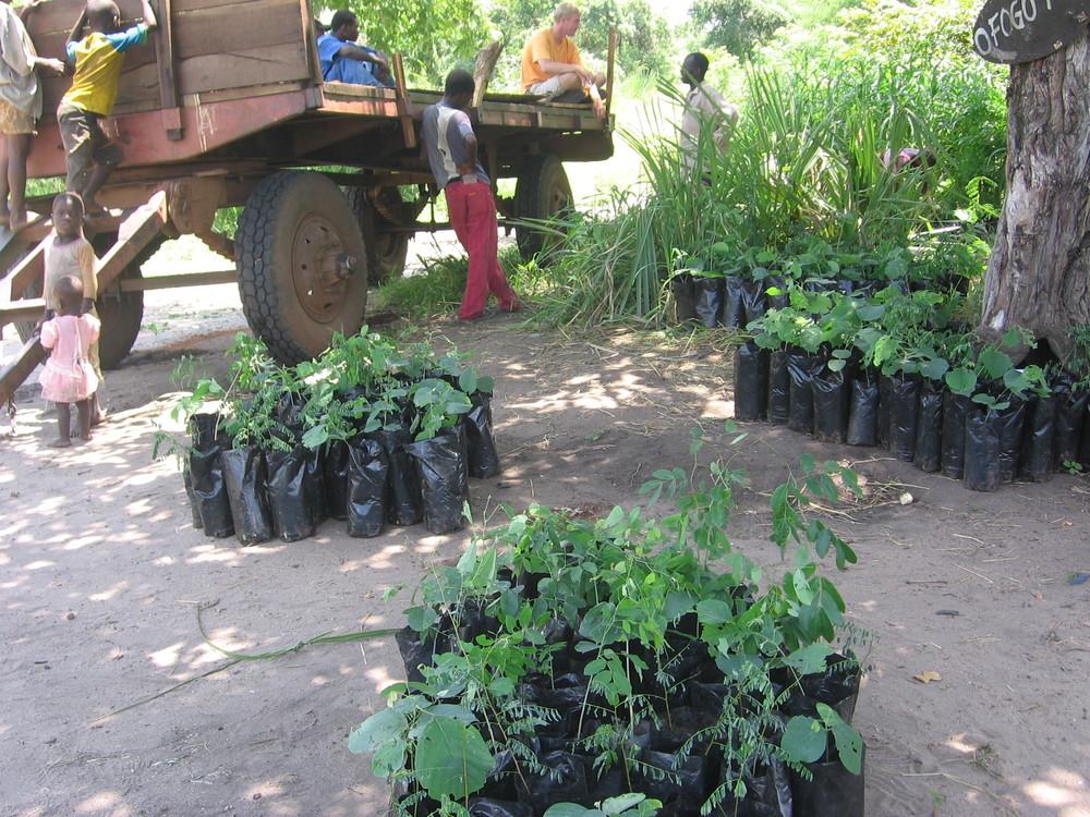 Community Reforestation - Delivering saplings