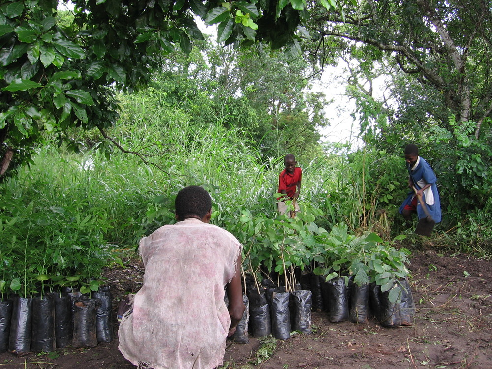 Community reforestation - whole family involved