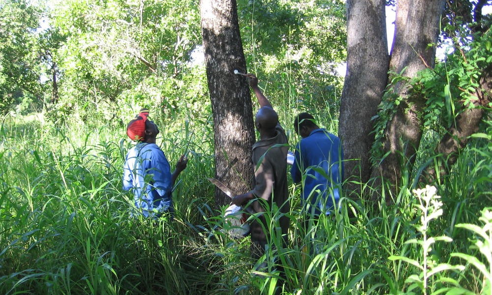 This is not just to identify trees that can be harvested but also identify those that need to be protected.