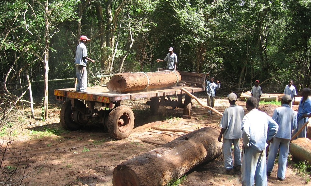 All loading done manually to avoid heavy equipment on the forest floor