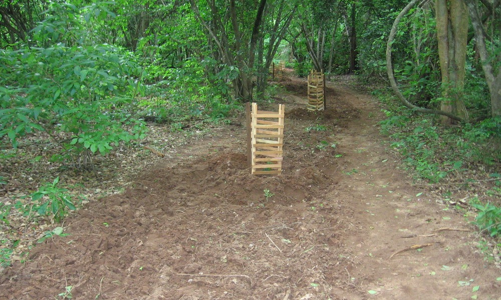 Roads that are closed are planted with indigenous saplings to assist with forest regeneration.