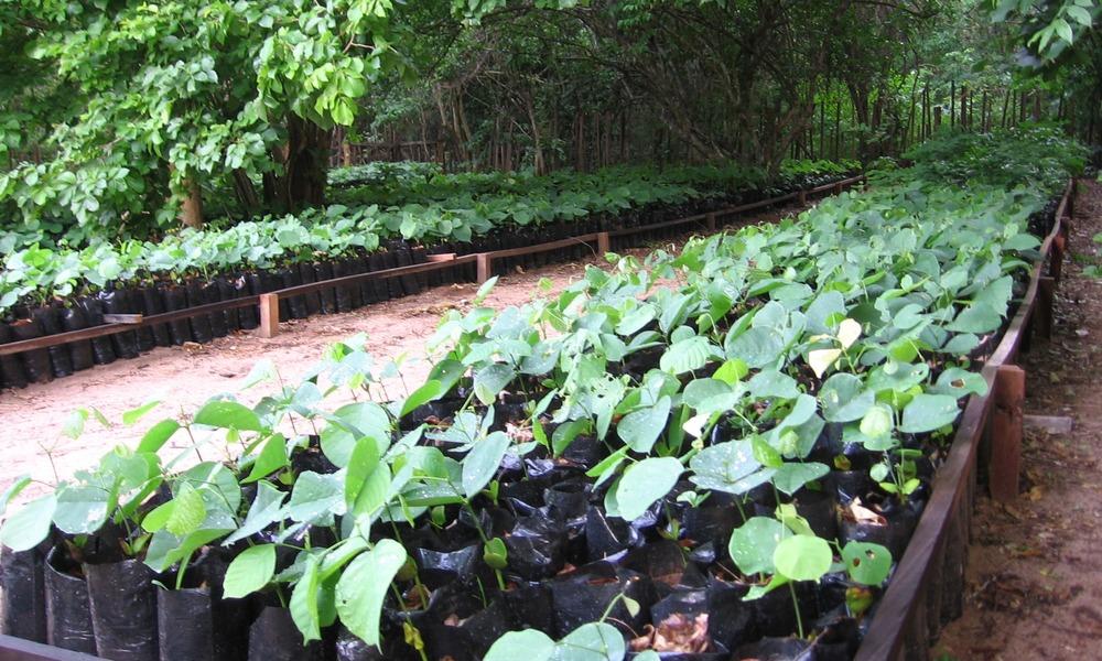Seedbeds