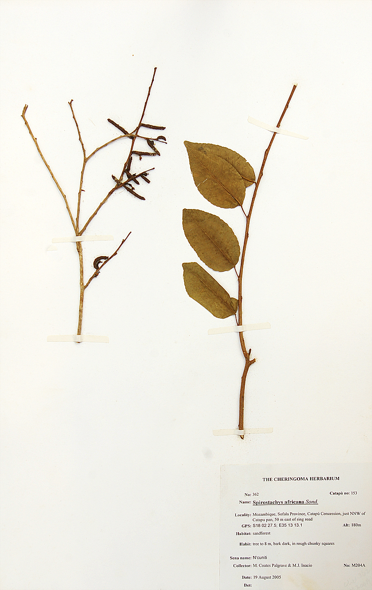 Herbarium Sample