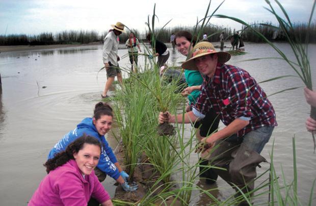 wetlands-planting.jpg