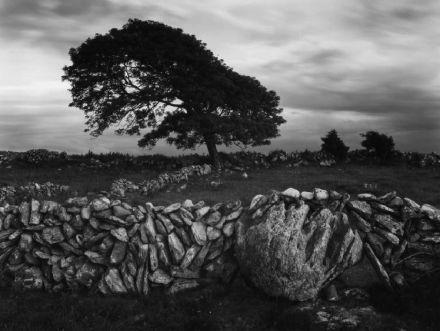 Tree in Ireland.jpg