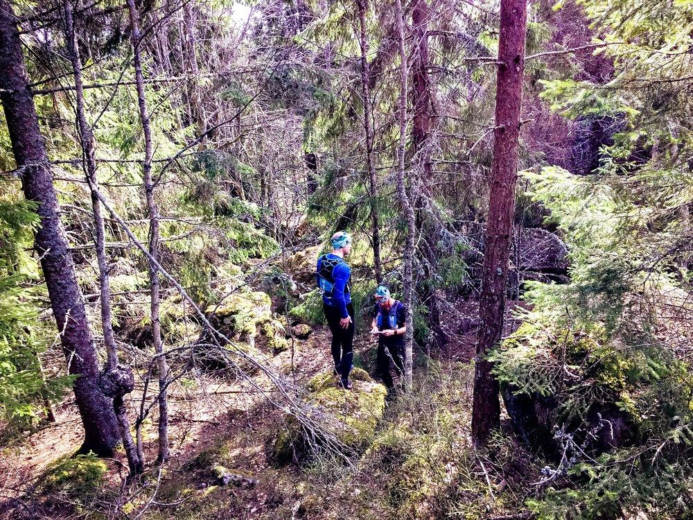 ...och det blev mer och mer urskog!