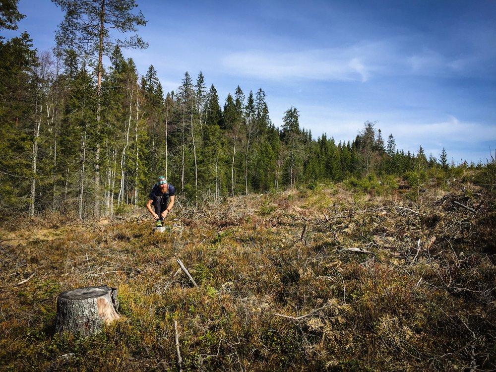 Medan nyligen avverkad skog visade sig vara lite knepigt...