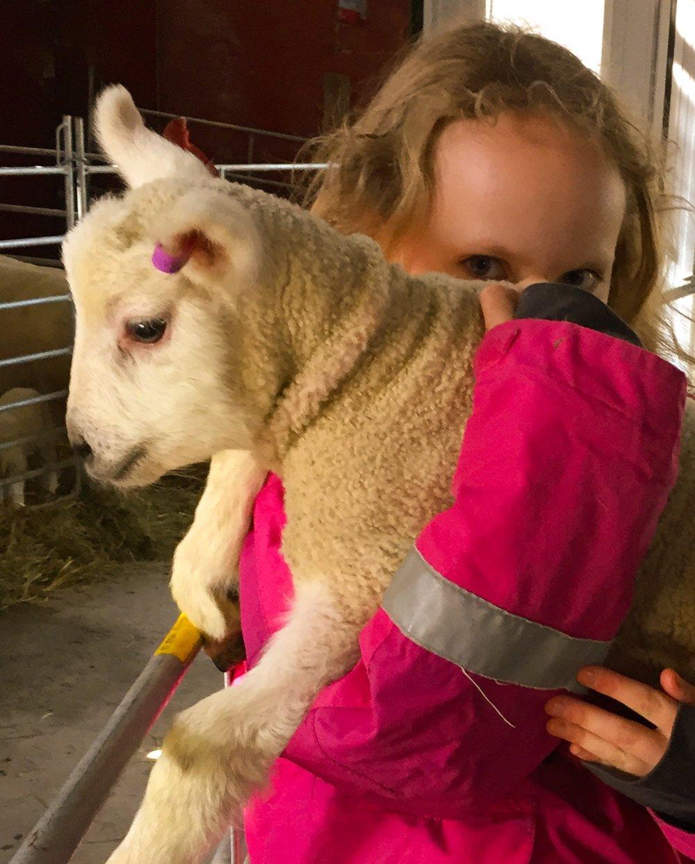 Försök mana fram sinnebilden av något riktigt kärleksfullt och fint — som till exempel ett barn som kramar ett lamm.