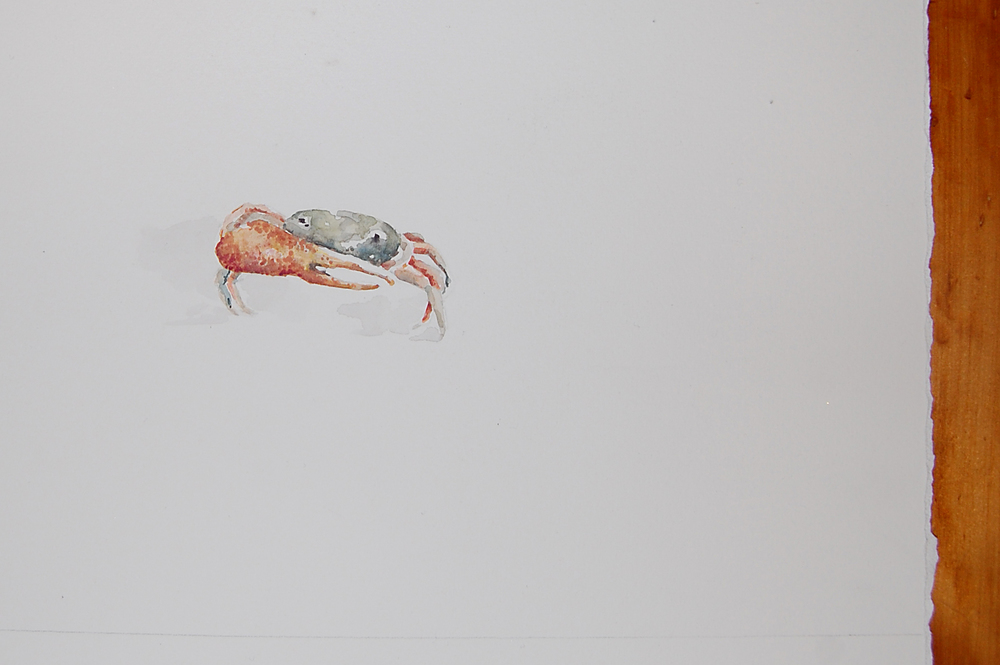 illustration-crab.JPG