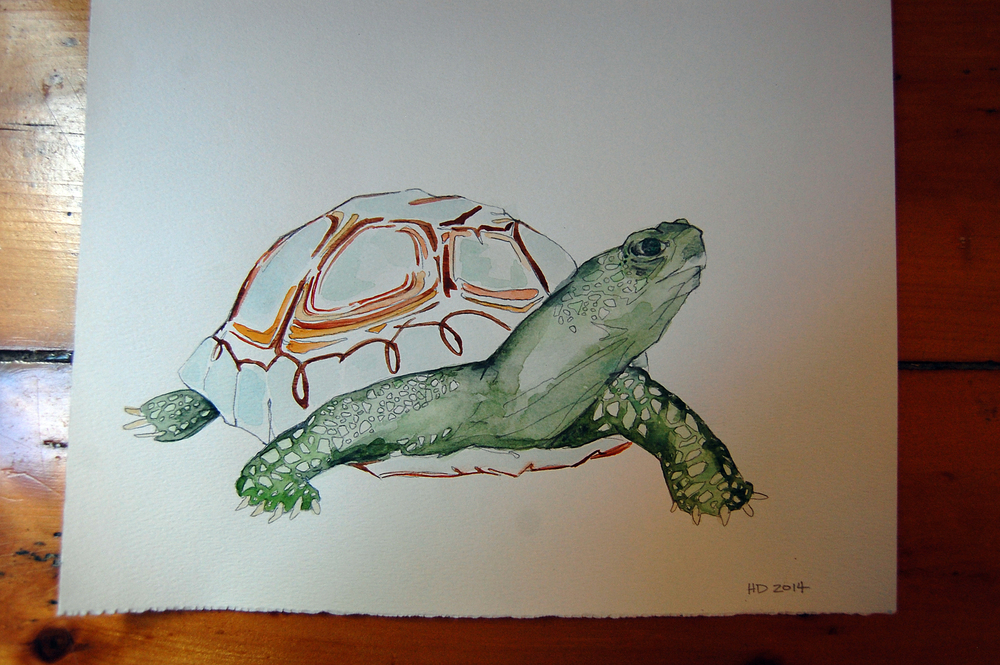 illustration-turtle.JPG